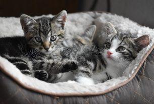 Comment transférer votre animal à un nouveau vétérinaire après un déménagement